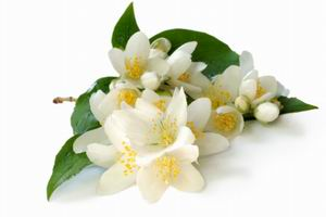 Aromystique romatherapy Oils - Jasmine